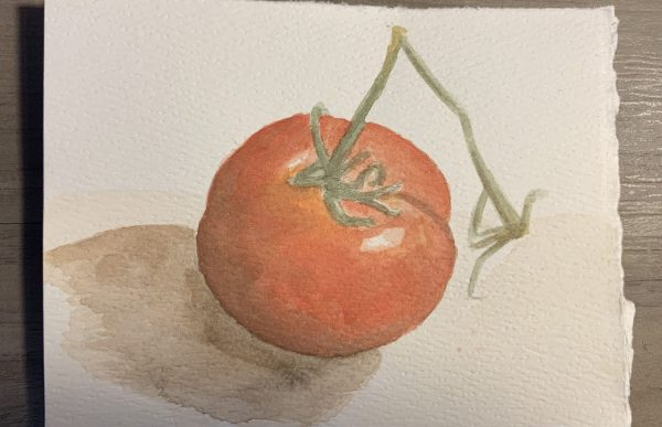 Watercolor painting of a tomato by Amanda Bentley